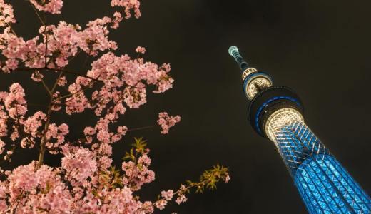スカイツリーと河津桜のコラボレーション。春の気配が近づいてきました。
