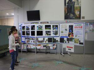 清田区役所ロビーではホタルパネル展を同時開催