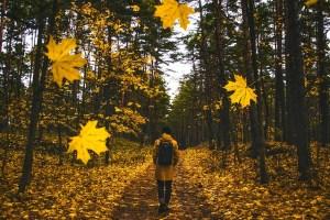 autumn-1804592_640