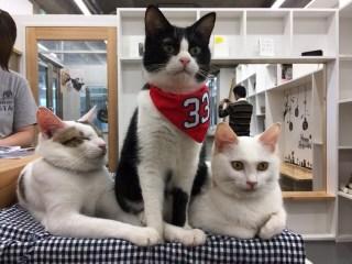 広島の保護猫カフェ「パブリック広島店」を体験してみた!