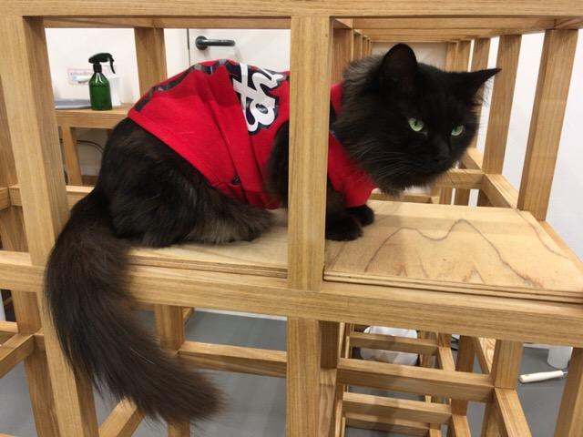 保護猫カフェ パブリック