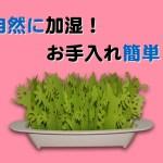 ミクニのミスティ・ガーデンは紙の自然気化式(通常の40倍)の加湿器で、機械のものと異なり、電気も使わず静音性も高いです、そして植物のデザインなのでインテリアにも!