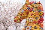 青森県十和田市・「SOBE-PI」の平打ちみそつけめんと官庁街通りの桜。