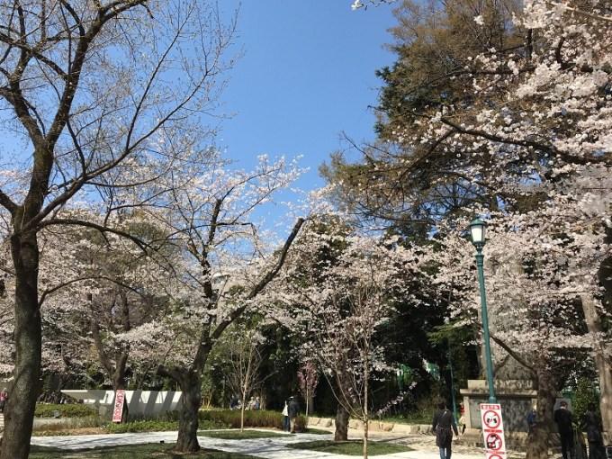 靖国神社桜3