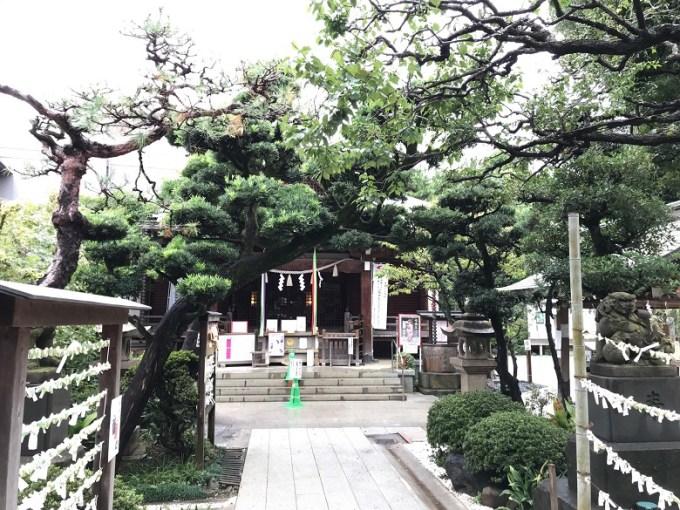 鳩森八幡神社松の木