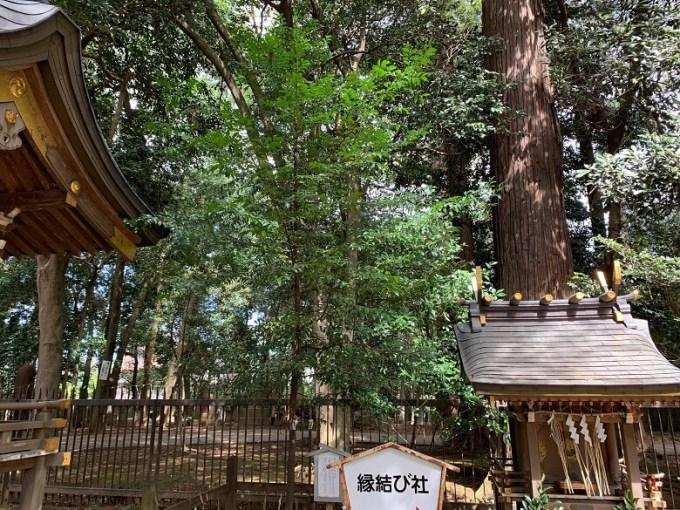 一言主神社なぎの木