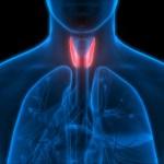 Tiroid Nedir? Tiroid Belirtileri, Nedenleri ve Tedavisi