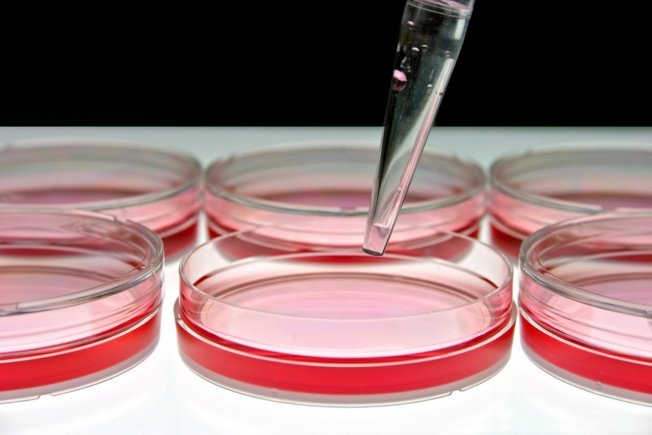Mikrobiyoloji, Parazitoloji Ünitesi