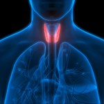 What is Thyroid? Thyroid Symptoms, Causes and Treatment