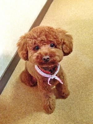 愛犬「モカ」