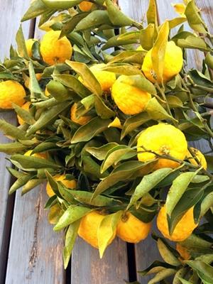 庭で採れた「柚子」