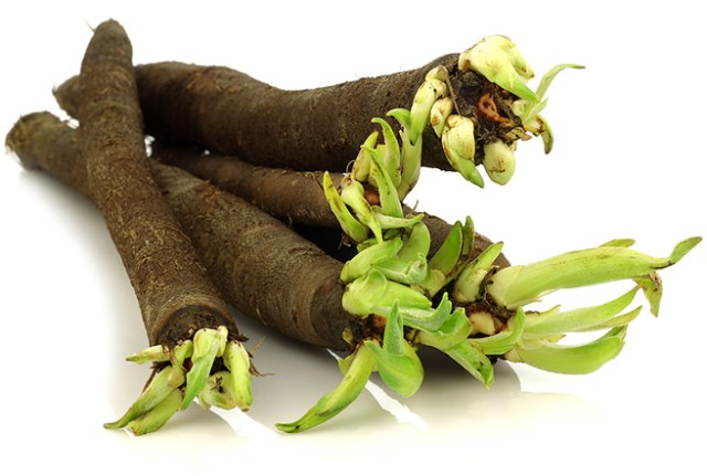 Scorzonera hispanica - black salsify