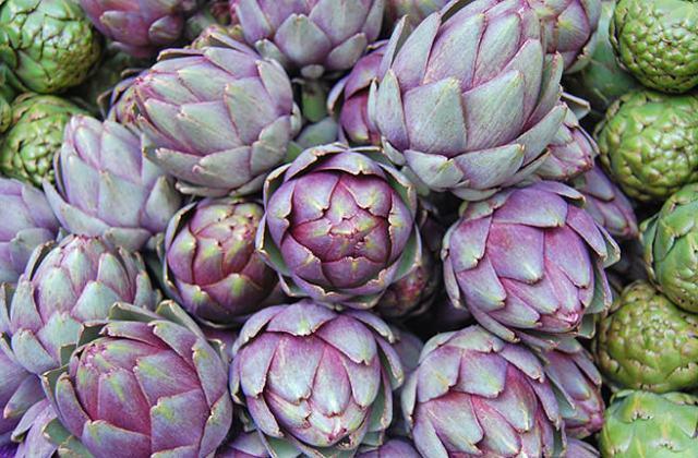 Cynara scolymus - Globe artichokes