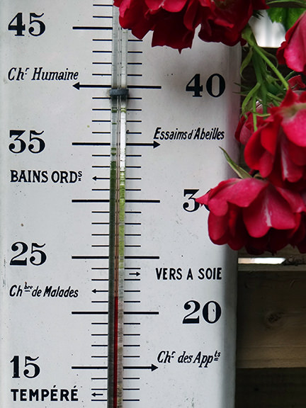 outdoor thermometer with pink rambling rose