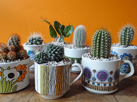 Vintage cups planted up with mini cacti | H is for Home