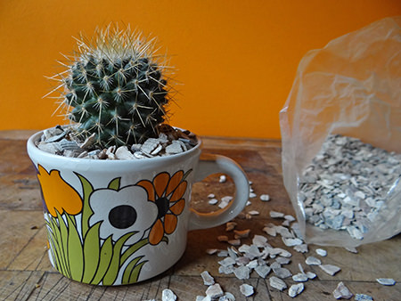 Vintage floral cup planted up with a mini cactus and top dressing of crushed shell