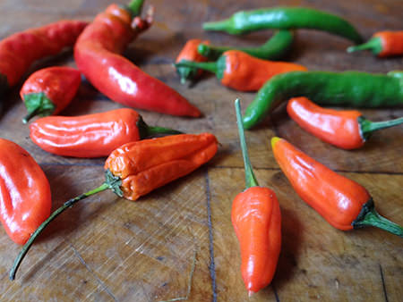 red and green chillies | H is for Home