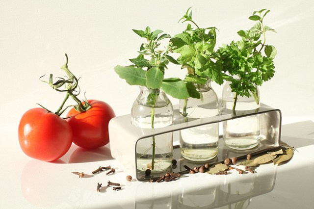 Bottles of herbs with tomatoes