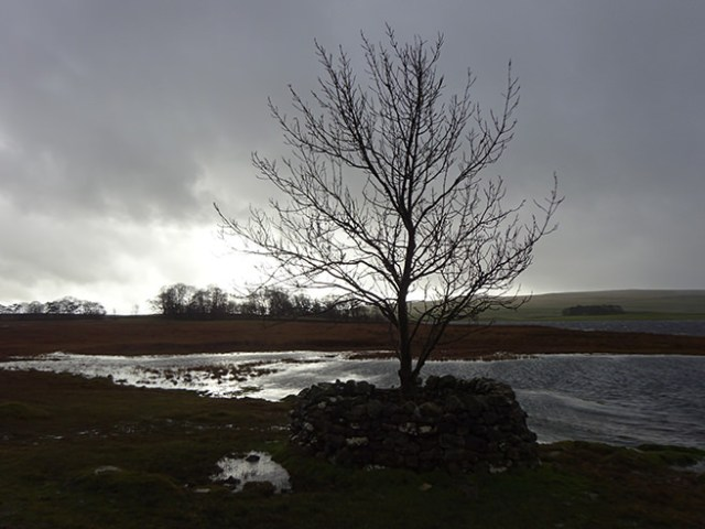 Tree beside Malham Tarn, Yorkshire Dales | H is for Home