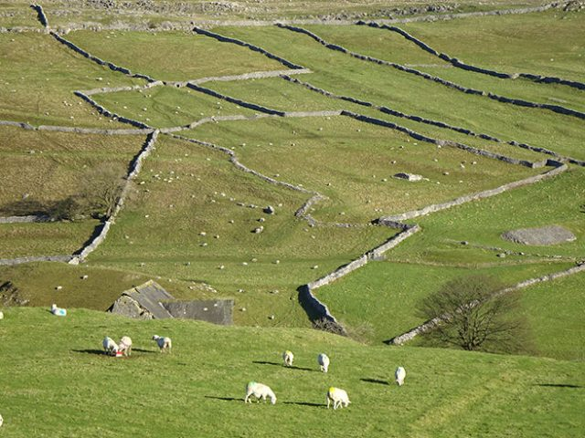 Sheep paddocks, Malham, Yorkshire Dales | H is for Home