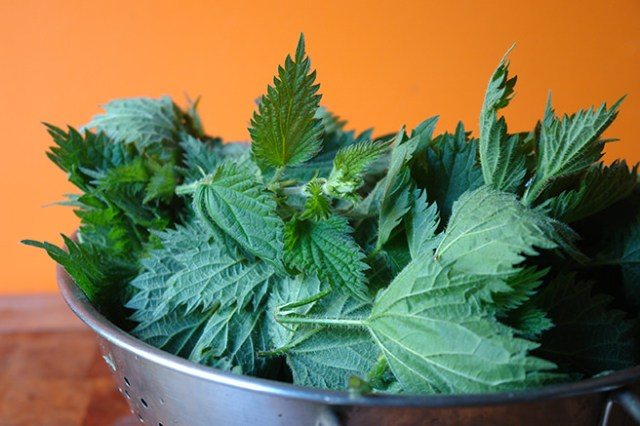 Freshly picked nettle tips |H is for Home