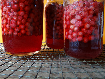 Redcurrants cooked in lidded jars in the oven