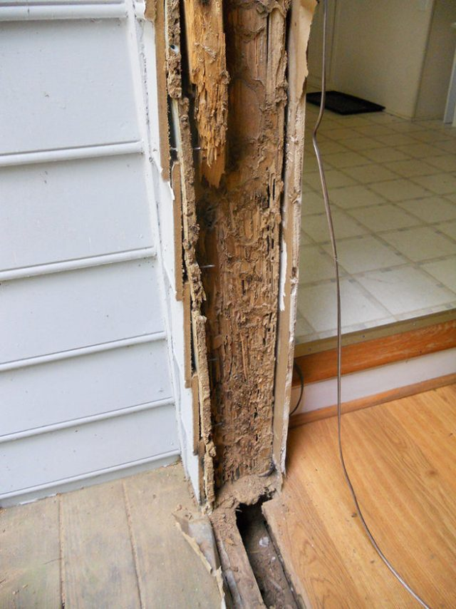 Door frame destroyed by termite infestation