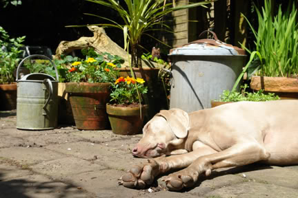 Fudge the dog asleep in the garden | H is for Home