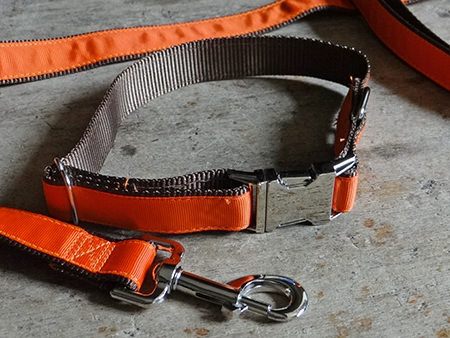 orange dog collar and lead
