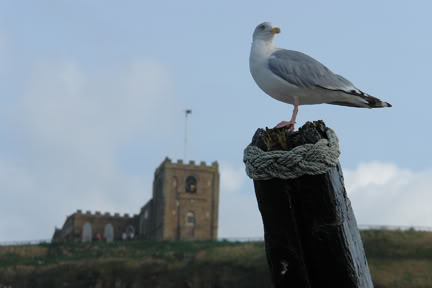 Seagull, Whitby | H is for Home