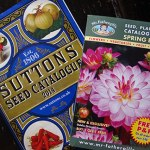 Allotment Diary: Going to seed