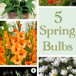 Gimme Five: Spring bulbs