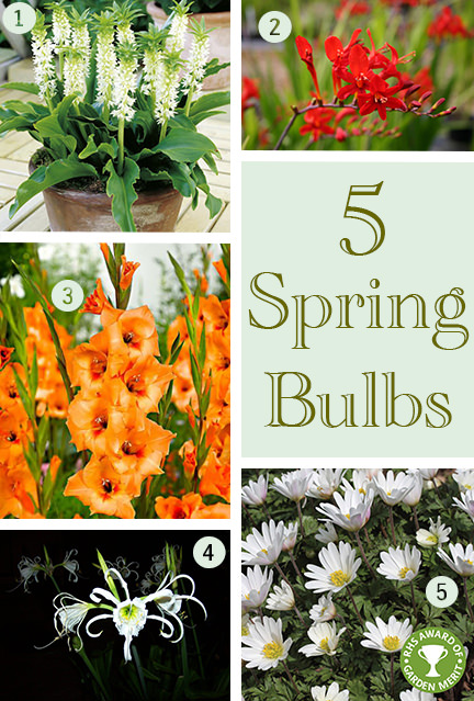 selection of 5 spring bulbs