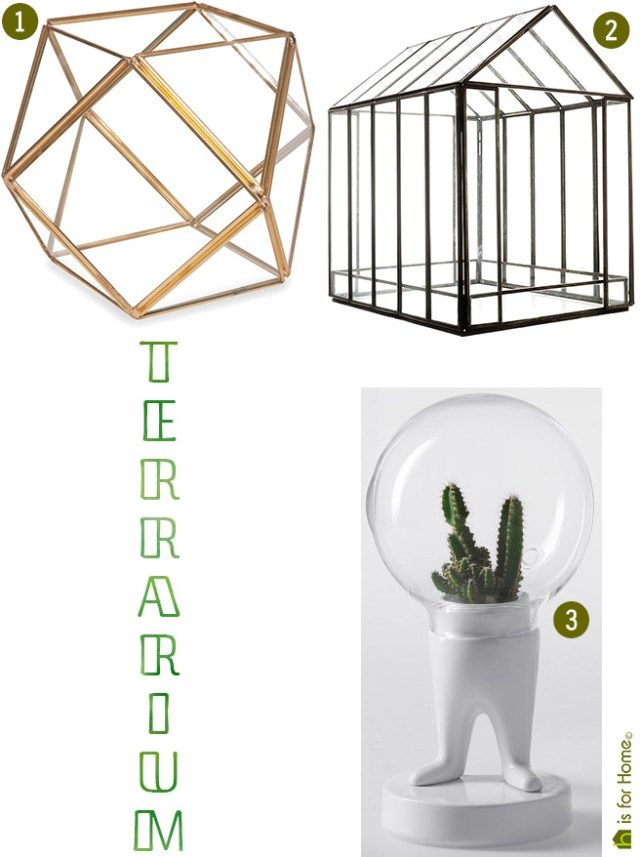 terrarium choices | H is for Home