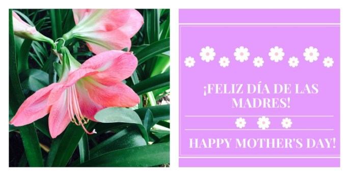 Feliz dia de las madres and Happy Mother's Day