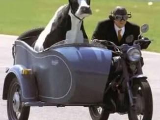 Maximas y minimas:la vaca no da leche; se la sacan