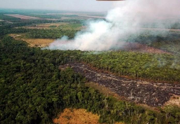 California puede salvar los bosques tropicales