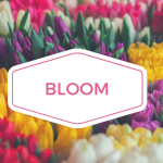 Learning and Pampering with New Moms at Bloom