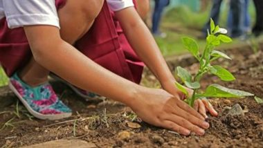 World Environment Day 2021: To protect the environment, let's take a pledge to conserve water and plant trees!