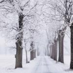 Noël en décembre, un petit bijou de roman sur l'amour pendant la guerre