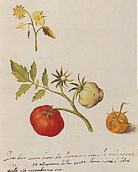 Pesto e pomodoro