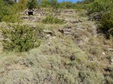 Terrasses sous la départementale 7, à 2 km de Sournia. Détail du cliché Bosquet oliviers sauvages à 600 m d'altitude.