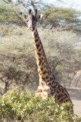 Marche avec les Massaï à Olduvai