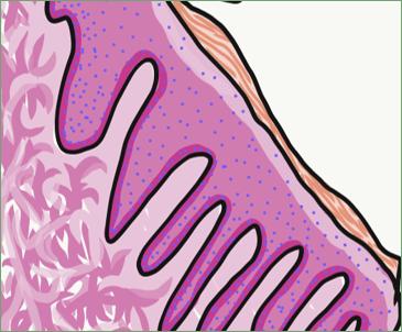 masticatory mucosa