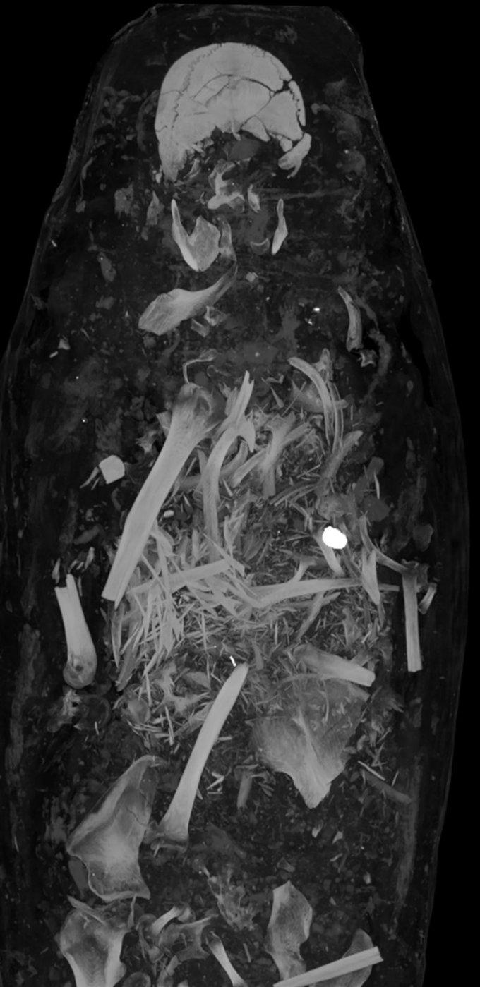 Interior de la momia del hombre. Se aprecian los huesos revueltos y lo que parece ser un sello.