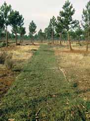 El resultado de la eliminación de residuos disminuye considera-blemente el riesgo de incendios o plagas, a la vez que contribuye en los terrenos más pobres a mejorar la estructura del suelo.Tierra de Pinares (Segovia).