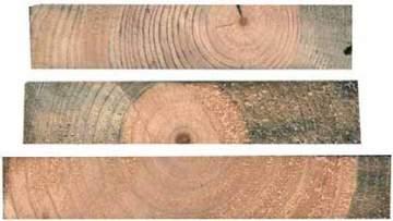 Corte de tres tablones de Pinus radiata (imagen superior) y corte con caras de un machón de Pinus sylvestris, dos de las coníferas más frecuentes en nuestros aserraderos. En la primera se puede apreciar el amplio espaciado de los anillos de crecimiento, un efecto del crecimiento rápido. En cambio, la madera del pino silvestre es mucho más densa.