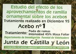 Tomo+II.+Futuro+de+los+bosques+y+Mapa+Forestal+_Página_045_Imagen_0003
