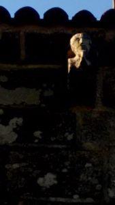 Detalle da igrexa de San Vicenzo da Graña, en Ponteceso / Elixio Vieites