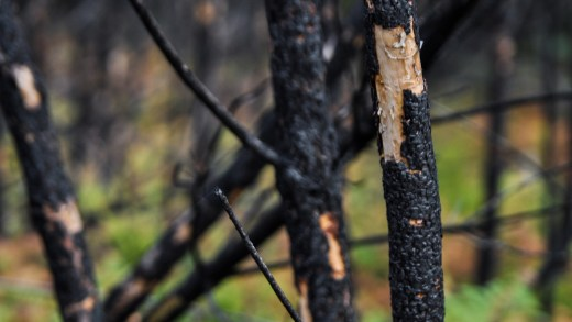 Un lume forestal estraga e deixa á vista o maior dolmen de Toén
